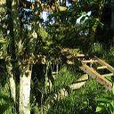 cabane branchages