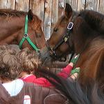 chevaux-enfants