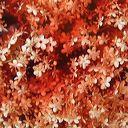 macération des fleurs dans du vinaigre