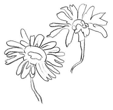La marguerite fleurs des talus - Image fleur violette gratuite ...